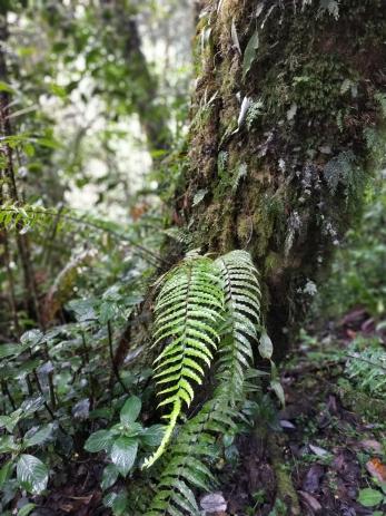 Different ferns